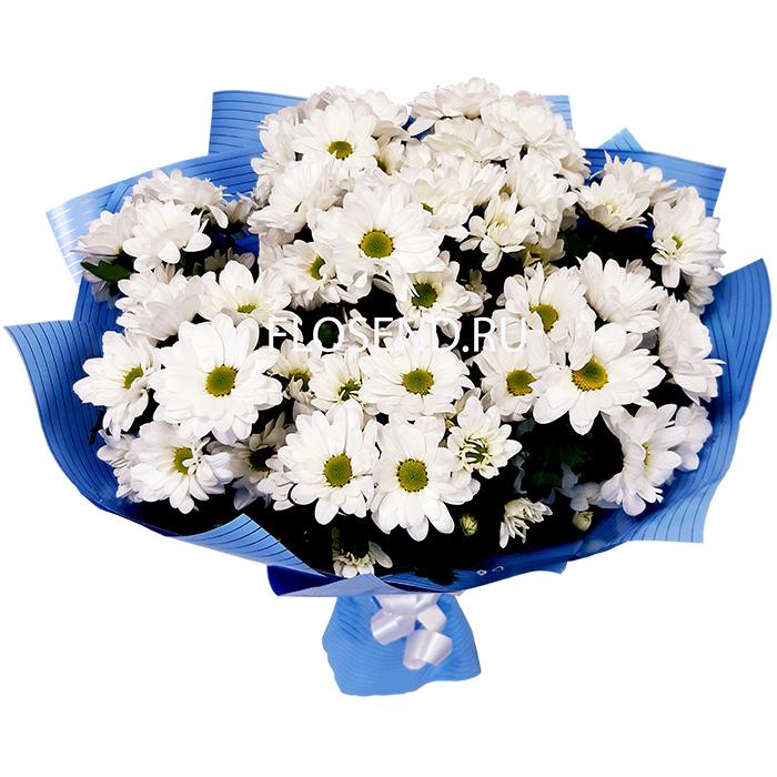 Букет 11 белых хризантем