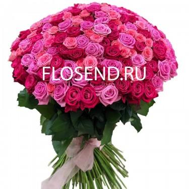 101 роза розовая, малиновая, кораловая