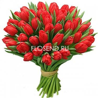 51 Тюльпан